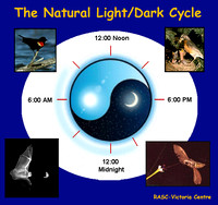 The Natural Light/Dark Cycle