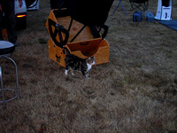 Feline Mascot at Star Party